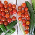 野菜を育てよう。小学生の体験学習は親次第ですよ!